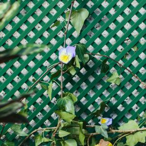 Celosia pvc 48mm 1x2m verde